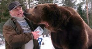 Ο άνθρωπος που είναι κολλητός με 6 τεράστιες καφέ αρκούδες (Video)