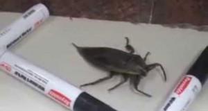 «Εγκλώβισαν» ένα τεράστιο έντομο με μαρκαδόρους για να το θαυμάσουν, αλλά… (Video)