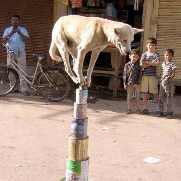 Εν τω μεταξύ στην Ινδία (6)