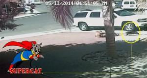 Γάτα σώζει αγοράκι από άγρια επίθεση σκύλου! (Video)