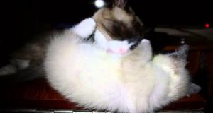 Γάτα περιποιείται το γατάκι της, όταν ξαφνικά… (Video)
