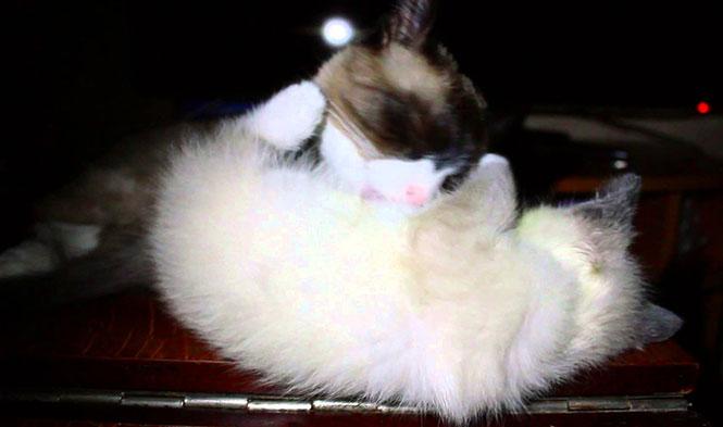 Γάτα περιποιείται το γατάκι της, όταν ξαφνικά...