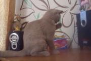 Γάτα προσπαθεί να πιάσει τον ρυθμό