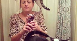 Γάτες που… κάνουν τα δικά τους! #13