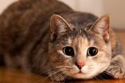 Γάτες στα πιο αναπάντεχα άλματα που έχετε δει
