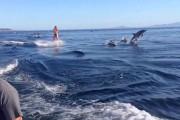 Κάνοντας wakeboarding μαζί με δεκάδες δελφίνια
