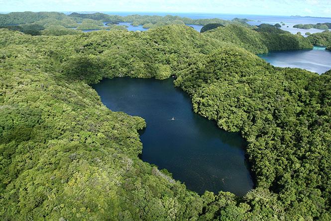 Κορίτσι κολυμπάει σε μια λίμνη γεμάτη από χιλιάδες μέδουσες (2)