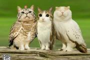 Κουκουβάγιες με γατίσια πρόσωπα (6)