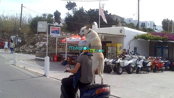 Ο μηχανόβιος σκύλος που τρέλανε την Μύκονο