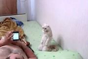 Πατριωτική γάτα στέκεται όρθια όταν ακούει τον εθνικό ύμνο