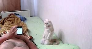 Πατριωτική γάτα στέκεται όρθια όταν ακούει τον εθνικό ύμνο (Video)