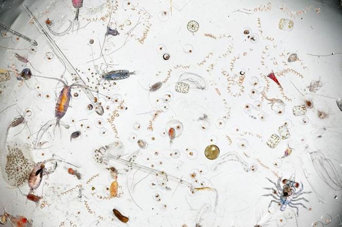 Μια σταγόνα θαλασσινού νερού σε μεγέθυνση 25 φορές | Φωτογραφία της ημέρας