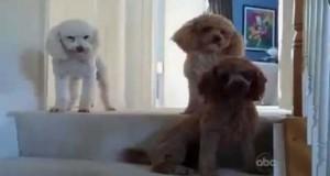 Ποιος από τους 3 είναι ο ένοχος σκύλος; (Video)