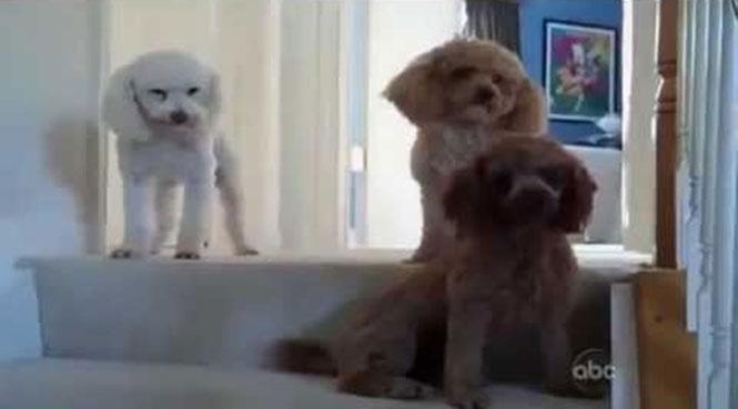 Ποιος από τους 3 είναι ο ένοχος σκύλος