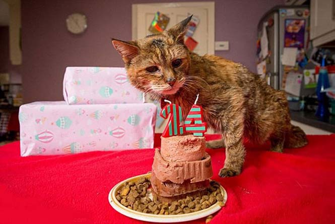 Poppy: Η γηραιότερη γάτα στον κόσμο (1)