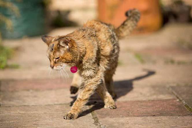 Poppy: Η γηραιότερη γάτα στον κόσμο (3)