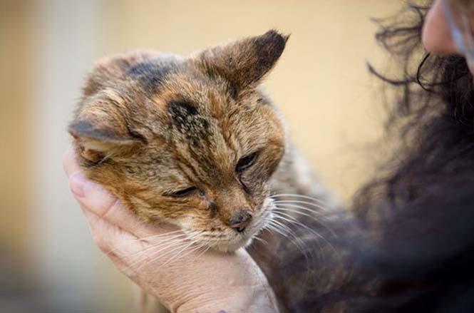 Poppy: Η γηραιότερη γάτα στον κόσμο (4)