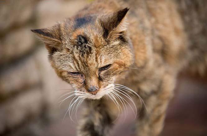 Poppy: Η γηραιότερη γάτα στον κόσμο (11)