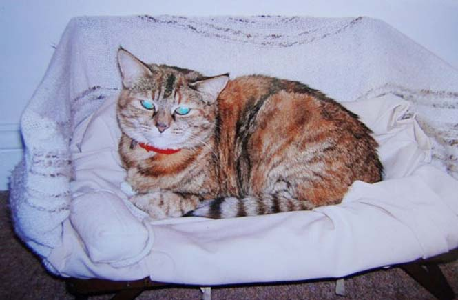 Poppy: Η γηραιότερη γάτα στον κόσμο (6)