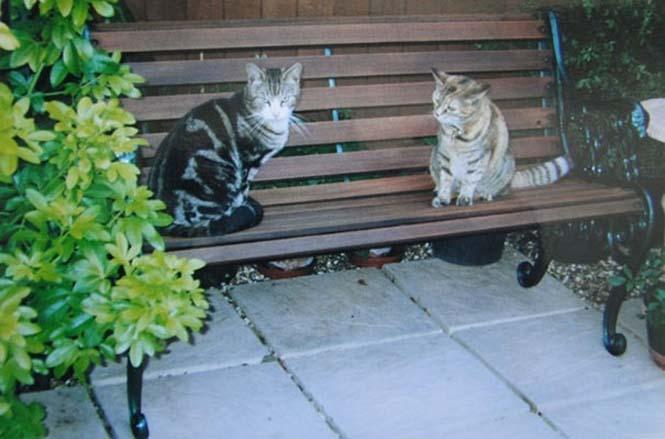 Poppy: Η γηραιότερη γάτα στον κόσμο (7)