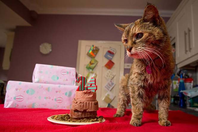 Poppy: Η γηραιότερη γάτα στον κόσμο (12)
