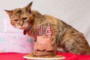 Poppy: Η γηραιότερη γάτα στον κόσμο (14)