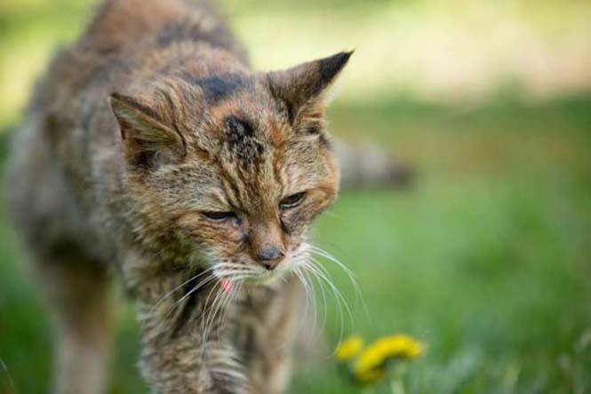Poppy: Η γηραιότερη γάτα στον κόσμο (8)