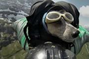 Ο πρώτος σκύλος που κάνει BASE jumping