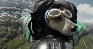 Ο πρώτος σκύλος που κάνει  BASE jumping (Video)