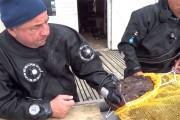 Ψαροτουφεκάς vs πεσκανδρίτσα