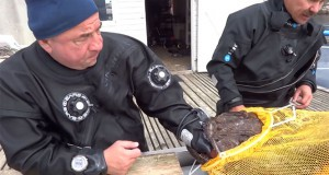 Πεσκανδρίτσα… «ψάρεψε» ψαροτουφεκά (Video)