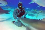 Χάδια με έναν καρχαρία