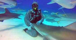 Κάνοντας ένα καρχαρία να φέρεται σαν… κατοικίδιο (Video)