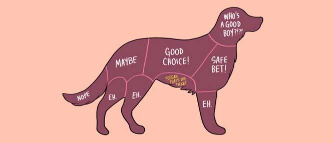 Χιουμοριστικός οδηγός δείχνει τα καλύτερα σημεία για να χαϊδέψετε διάφορα ζώα (2)
