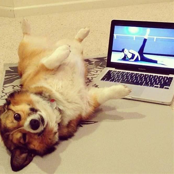 Ζώα που κάνουν Yoga (1)