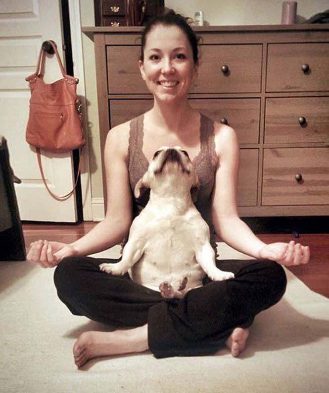 Ζώα που κάνουν Yoga (4)