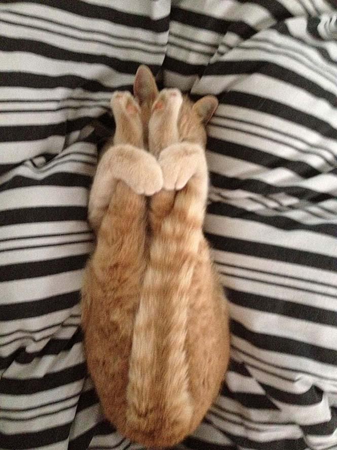 Ζώα που κάνουν Yoga (5)