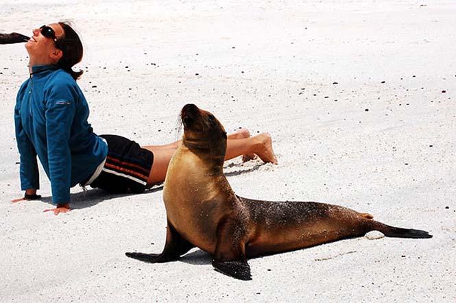Ζώα που κάνουν Yoga (10)