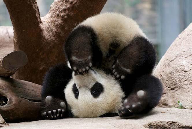 Ζώα που κάνουν Yoga (15)