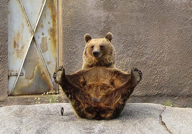Ζώα που κάνουν Yoga (16)