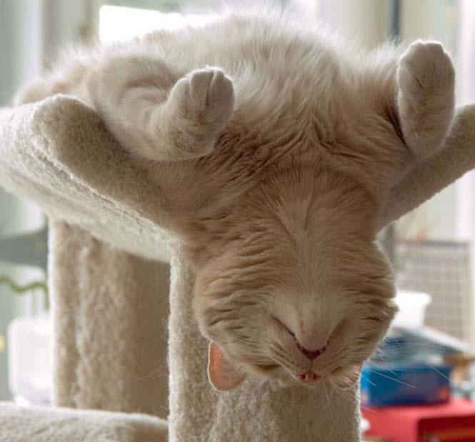 Ζώα που κάνουν Yoga (17)