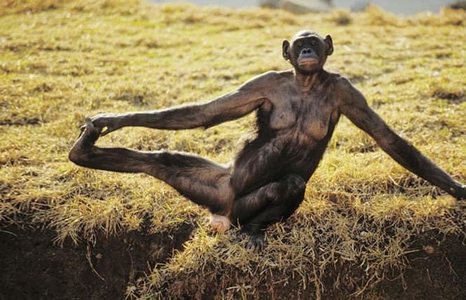Ζώα που κάνουν Yoga (18)
