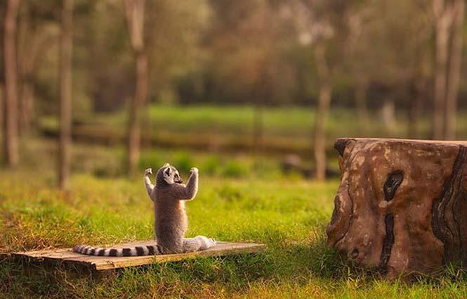 Ζώα που κάνουν Yoga (22)
