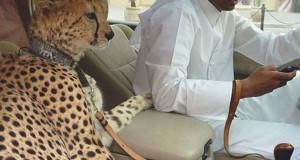 18 απίστευτα στιγμιότυπα από τη ζωή των πλουσίων στο Ντουμπάι