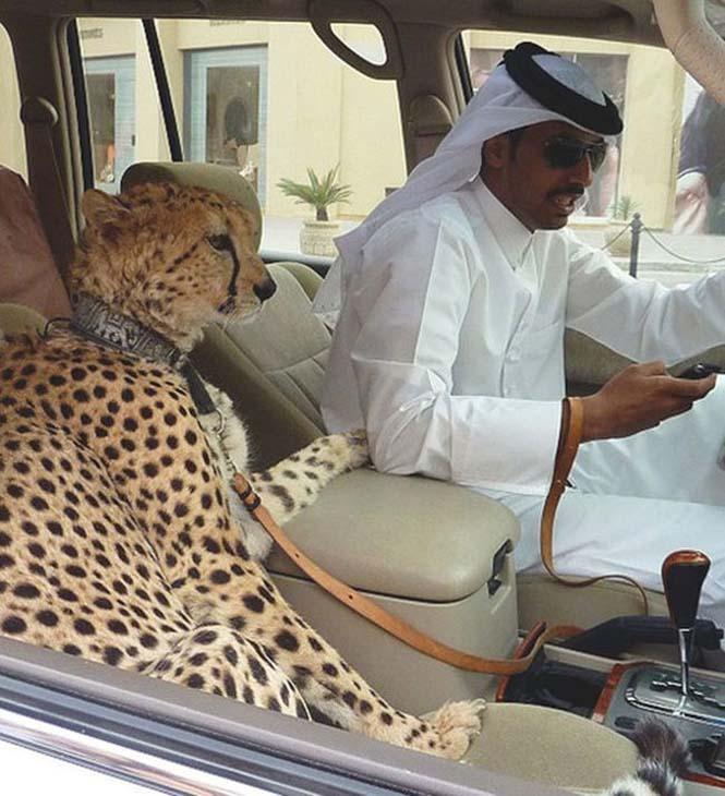 Ζωή πλουσίων στο Ντουμπάι (2)