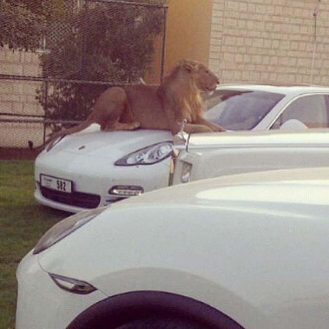 Ζωή πλουσίων στο Ντουμπάι (6)