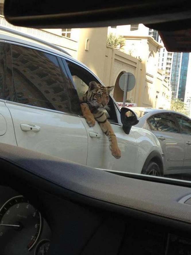 Ζωή πλουσίων στο Ντουμπάι (9)