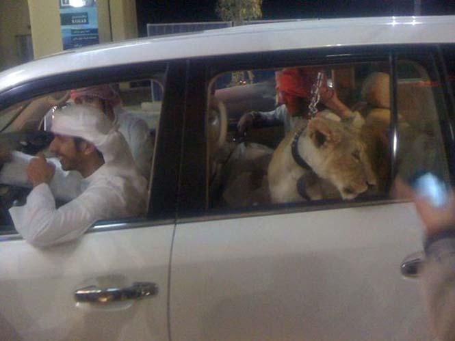 Ζωή πλουσίων στο Ντουμπάι (17)