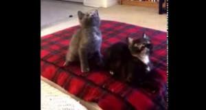 Δύο γατάκια συγχρονίζονται τέλεια με ένα χορευτικό τραγούδι (Video)