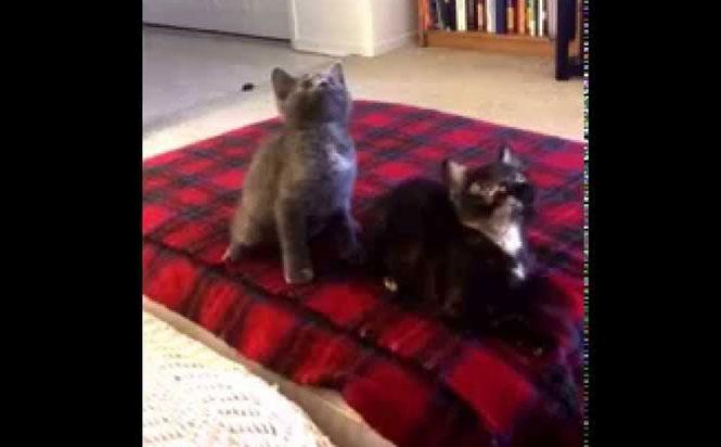 Δύο γατάκια συγχρονίζονται τέλεια με ένα χορευτικό τραγούδι